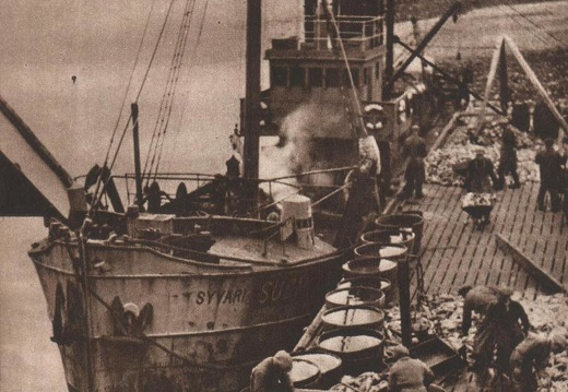 The Finnish steam trawler SYVÄRI in the port of Petsamo, photographed 1938